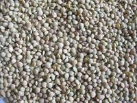 Sell Chinese green lentils