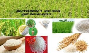 Wholesale Rice: Jasmine Rice