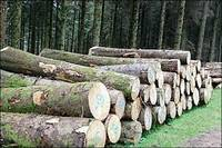 Timber Logs, Bubinga Wood, Tali Woods, African Timber Woods