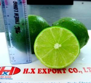 Wholesale export: High Quality Vietnam Seedless Lime - Hang Xanh Export Co., Ltd