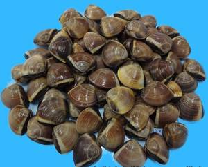 Wholesale korea: Frozen Whole Brown Clam