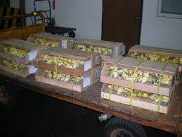 Wholesale finch birds: Yorkshire Canary,Lancashire Canary,Finch Birds,Lovebirds,Exotic Birds