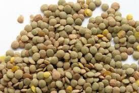 Wholesale split lentils: Split Green Lentils and Whole Red Lentil