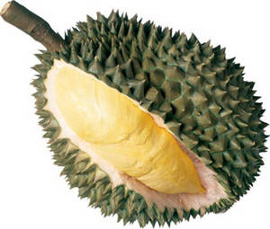 Wholesale durian: Durian