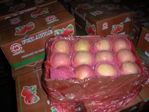 Wholesale fresh fruit: Fresh Fruits