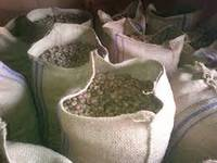 Sell Raw Cashew Nut from Indonesia, we export large quantity