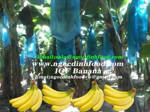Wholesale sale: Fresh Green Cavendish Banana for Sale