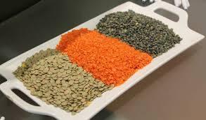 Wholesale split lentils: Split Lentils