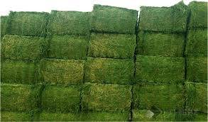 top quality: Sell Top Quality Alfafa Hay for Animal Feeding