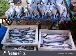 Wholesale frozen tilapia fish: Kingfish ,EEL Fish , Mackerel Sardin,  Bonito Tuna,  Frozen Salmon ,Tilapia Fillet, Red Tilapia