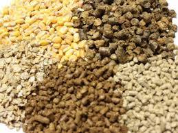 Wholesale Corn: Animal Feed for Sale