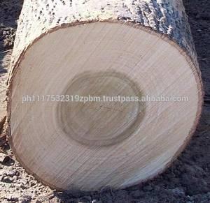 Wholesale Timber: poplar Logs / Veneer Logs / Sawn Logs