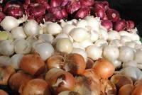 Wholesale fresh onion: Fresh Bulb Onions
