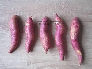 Wholesale Fresh Sweet Potatoes: Sweet Potato