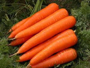 Wholesale sale: Fresh Carrot for Sale
