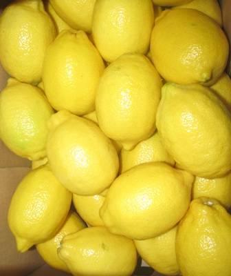 fresh lemon: Sell Fresh Lemon South African