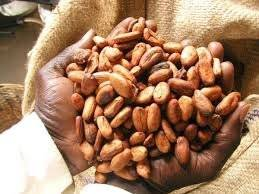 Wholesale candy: Cocoa Bean