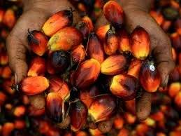 Wholesale red palm oil specifications: Grade AA Red Palm Oil Available for Sale
