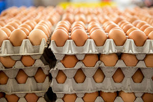 Wholesale table: Table Egg Variety and Chicken Origin Chicken Eggs in Bulk