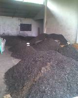 Sell Coconut Charcoal Shell