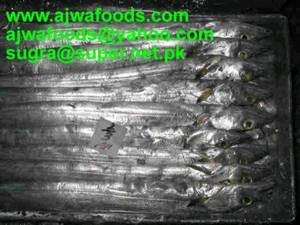 Wholesale frozen blue swimming crab: Ribbon Fish