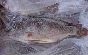 frozen seafood: Sell Frozen Tilapia Fish/ seafood