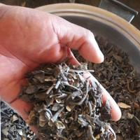 Macrocystis Integrifolia Seaweed Dried