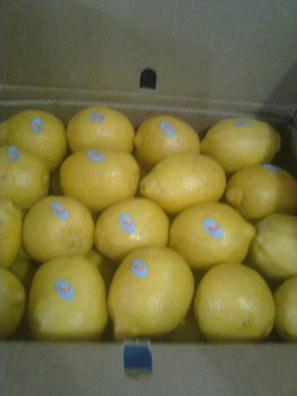 fresh lemon: Sell  fresh lemon
