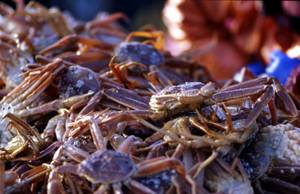 Wholesale king crab: Live King Crab