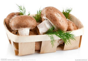 Wholesale lentinus edodes extract: Shiitake Mushroom Extract Powder- 20% Polysaccharides, Non-GMO, Free Sample, Halal