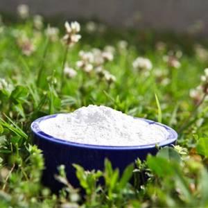Wholesale cookie: Arrowroot Powder