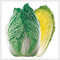 how to grow chinese cabbage from seed