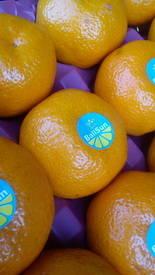 Wholesale tangerine: Tangerine