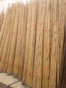 Wholesale bamboo: Tonkkin Bamboo Poles