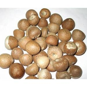 Wholesale dried: Philippines Betel Nuts WHOLE 60-65% Good Whole, Well Dried for Sale!
