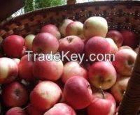 fresh fruit: Sell Fresh Apple Fruits