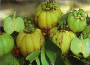 Wholesale citric acid: Garcinia Cambogia Extract( Hydroxy Citric Acid,HCA Manufacturer Direct Sale  Lisa@scqqbio.Com