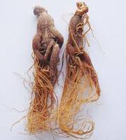 Ginseng Extract Manufacturer Direct Sale Lisa@scqqbio.Com