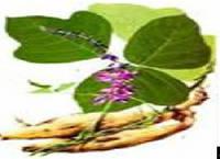 Thailand Wild Kudzu Extract  Manufacturer Direct Sale  Felix@scqqbio.Com