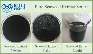 Wholesale seaweed liquid fertilizer: High Quality Ascophyllum Nodosum Seaweed Extract Liquid