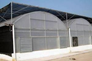 Wholesale pc sheet: PC Sheet Greenhouse (BZ-PG-1402)