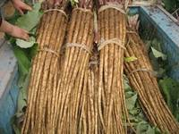 Fresh Burdock Root ,Burdock