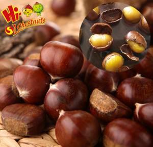 Wholesale fresh chestnut: Organic Fresh Chestnuts