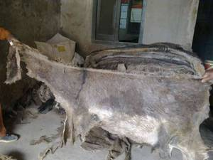 Wholesale b: Dry Salted Donkey Hides