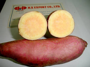 Wholesale Fresh Sweet Potatoes: Fresh Sweet Potato