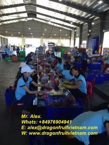Wholesale sale: Hot Sales Vietnam Drahon Fruit