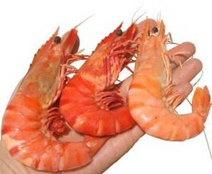 Wholesale Shrimp: Nang Tom