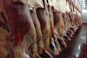 Wholesale frozen oyster: Halal Frozen Beef Meat/ Pork Meats, Lamb Meats and Offals