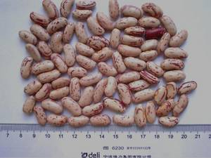 Wholesale lighting: Excellent Quality Light Speckled Kidney Beans