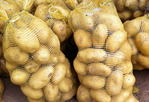 Wholesale Fresh Sweet Potatoes: Fresh  Irish Potatoes with Sweet Price for Sale